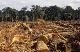 amazon_deforested